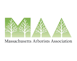 Member Massachusetts Arborists Association